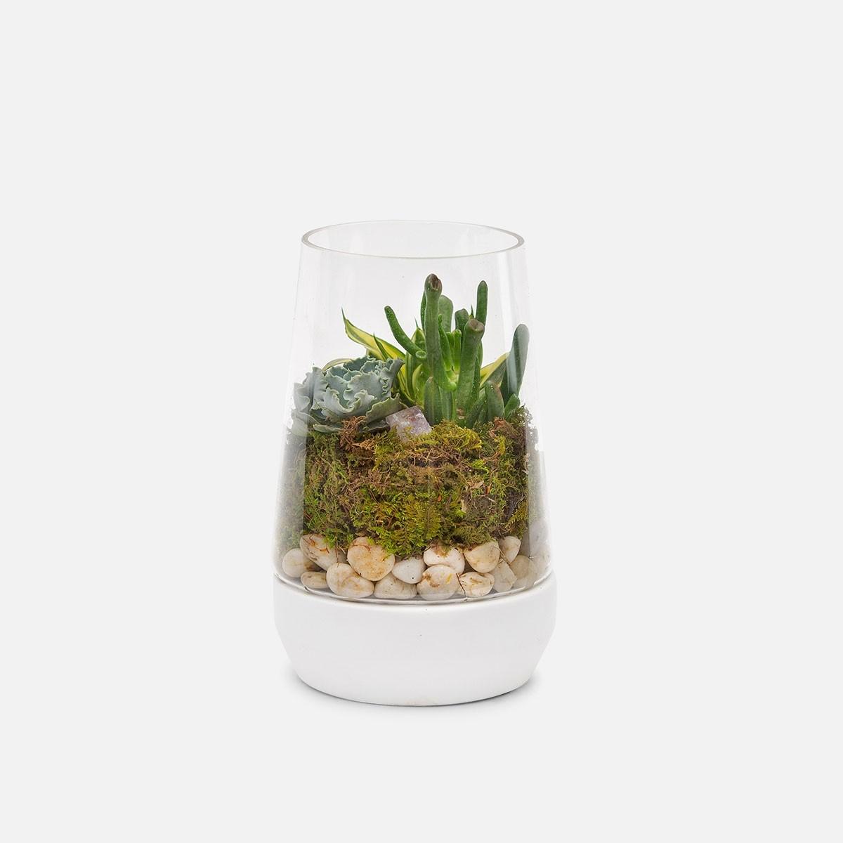 Small Desert Crystal Terrarium Plant Delivery Nyc Plantshed Com