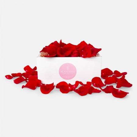 Red Rose Petals Box
