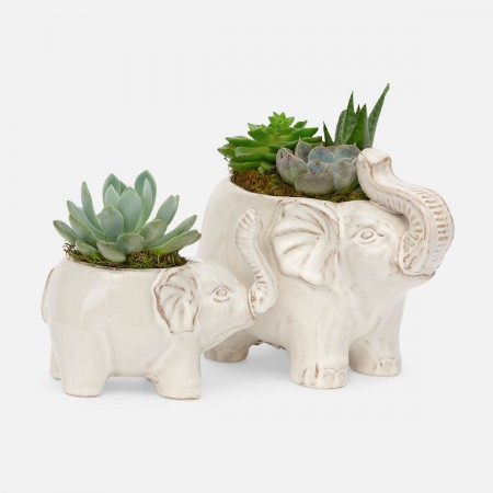 Lucky Elephant Succulent Planter Set