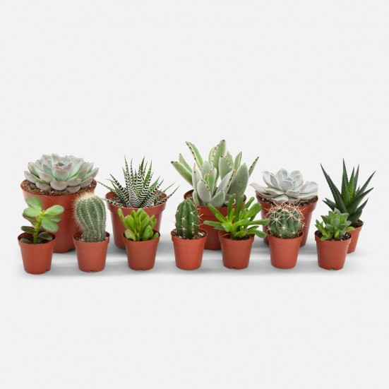 Instant Jungle Bundle - Succulents Best Sellers