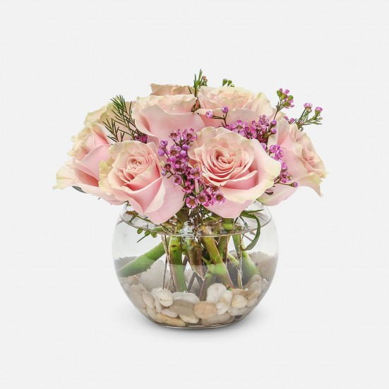 Make Me Blush - Roses - PlantShed.com