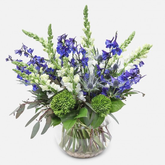 Moonburst - Delphinium and Snapdragons - PlantShed.com