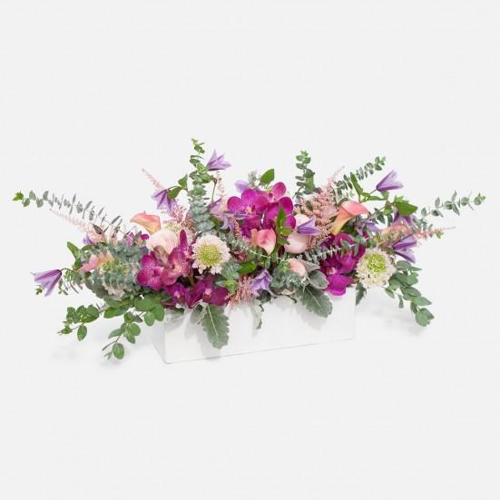 Violette Calla Lilies