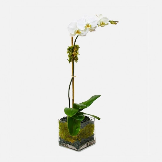 Classic 1-Stem Phalaenopsis (glass) Business Gifting
