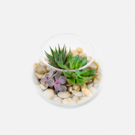 Succulent Bowl Get Well