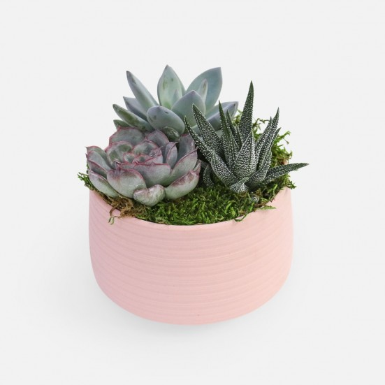Succulent Garden Trio - Pink Valentine's Day Plants and More