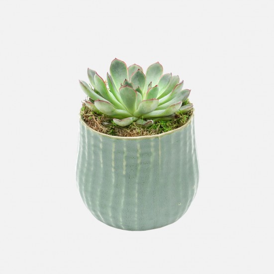Large Succulent in Palmero Pot Birthday