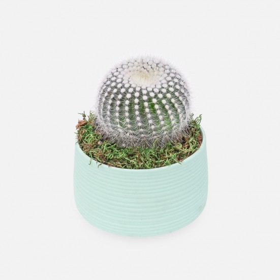 Cactus in mint Ceramic Pot Just Because
