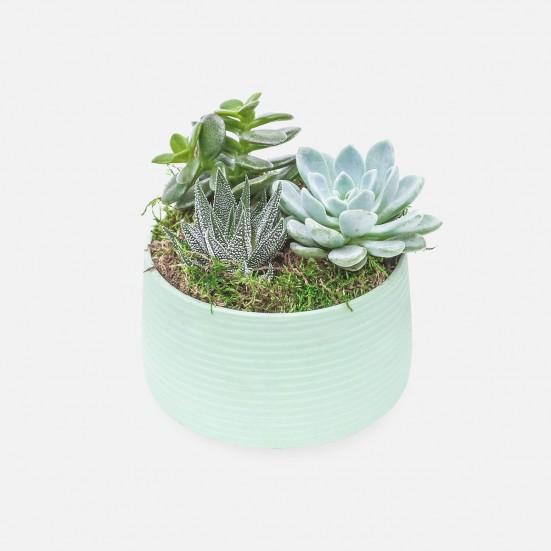 Succulent Garden Trio in mint Ceramic Pot Plants