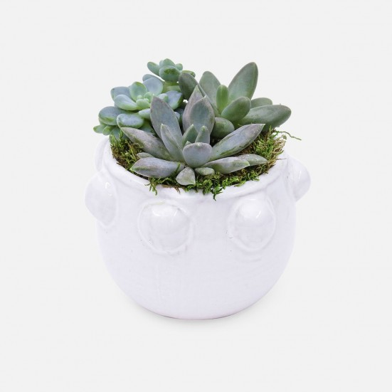 Succulent Garden Trio in Small Fem Rosa Pot Birthday
