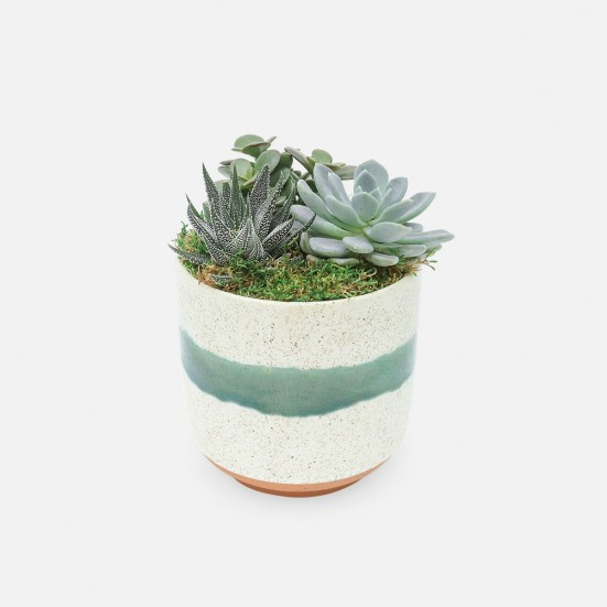 Succulent Garden Trio in Medium Mateo Pot Cacti & Succulents