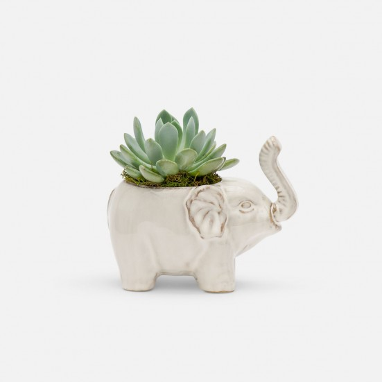Baby Lucky Elephant Succulent Planter Birthday