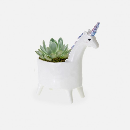 Baby Unicorn Succulent Planter Get Well