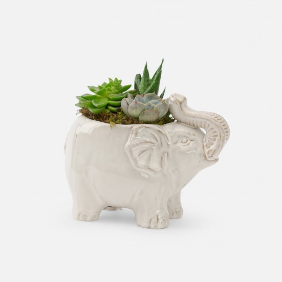 Lucky Elephant Succulent Planter Get Well