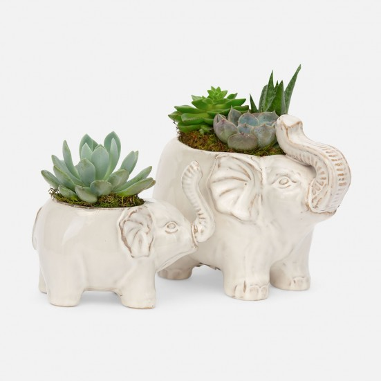 Lucky Elephant Succulent Planter Set Plants