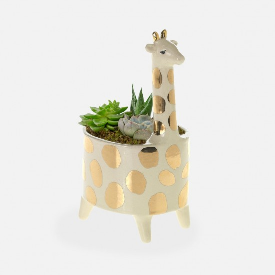 Giraffe Succulent Planter Birthday