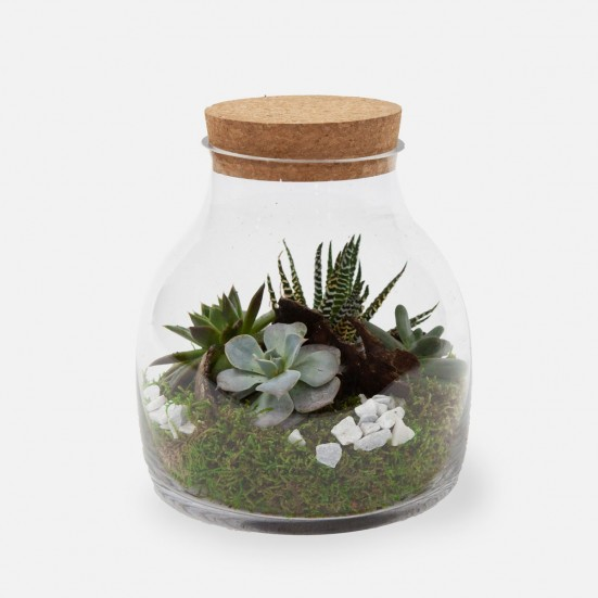 Cactus Bottled Terrarium Get Well