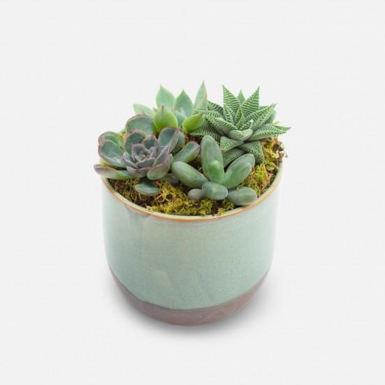 Caribe Succulent Garden Cacti & Succulents