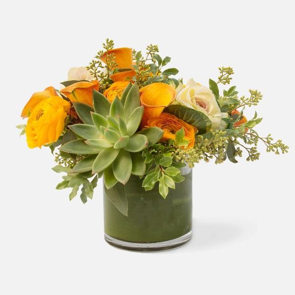 Evelyn by Plantshed