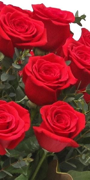 3-Dozen Elegant Roses - Specials