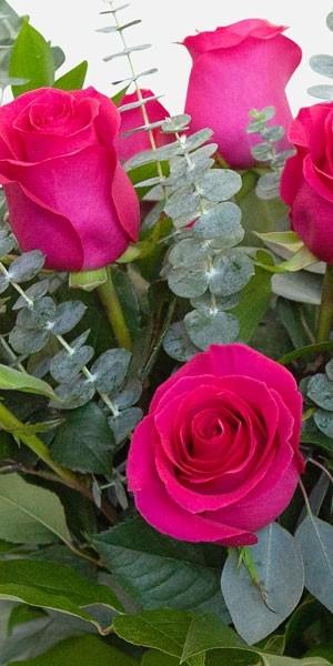 1-Dozen Bright Pink Roses