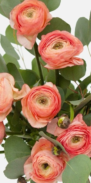 Peach Ranunculus Bouquet