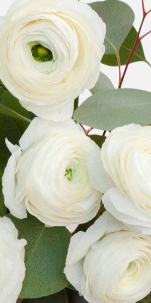 White Ranunculus Bouquet