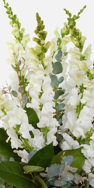 White Snapdragon Bouquet