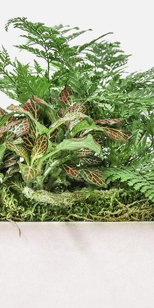 Shade Garden in Large Verge Planter
