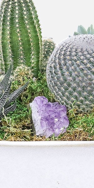 Crystal Cactus Garden in Large Verge Planter