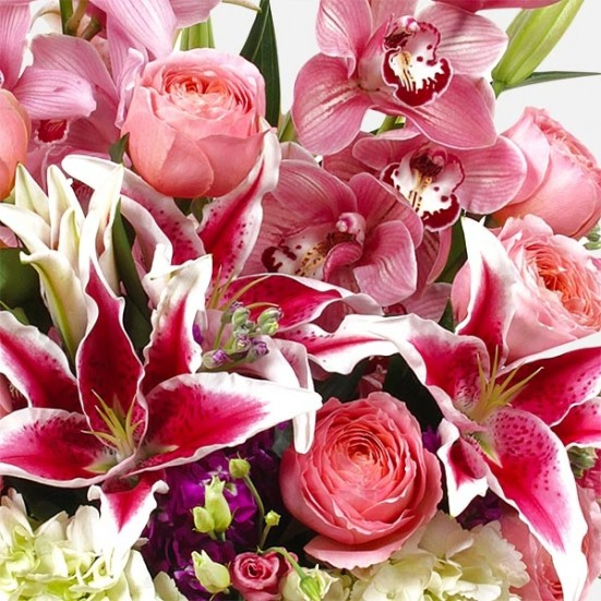 Erato All Valentine's Flowers
