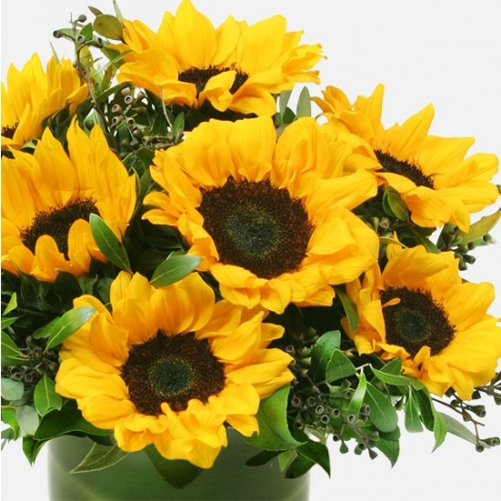 Sun Shower Sunflowers