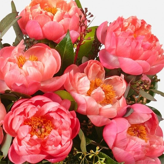 Manhattan Peonies - plantshed.com