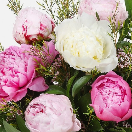 Charming Peonies Birthday