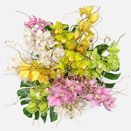 Pattaya - Cymbidium Orchids - Plantshed.com