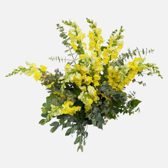 Yellow Snapdragon Bouquet Flowers