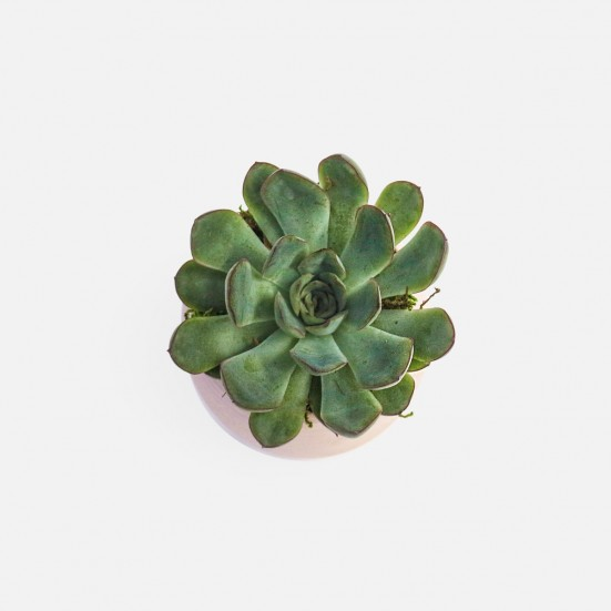 Succulent Cup - Pink Birthday