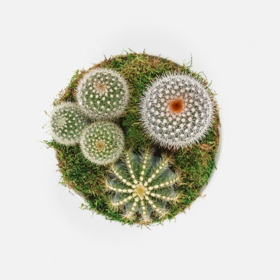 Cactus Garden in Medium Taliah Bowl Birthday