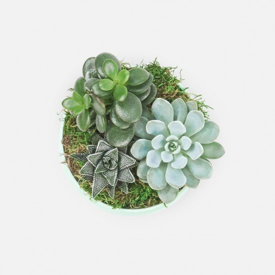 Succulent Garden Trio in Mint Ceramic Pot Cacti & Succulents