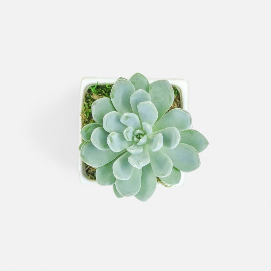 Succulent in Mini Verge Cube Birthday