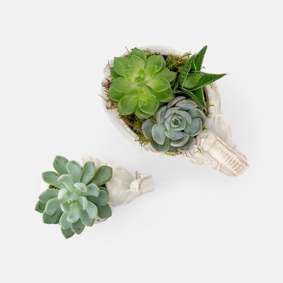 Lucky Elephant Succulent Planter Set Get Well