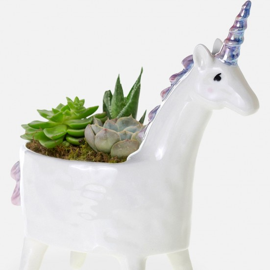Unicorn Succulent Planter Get Well