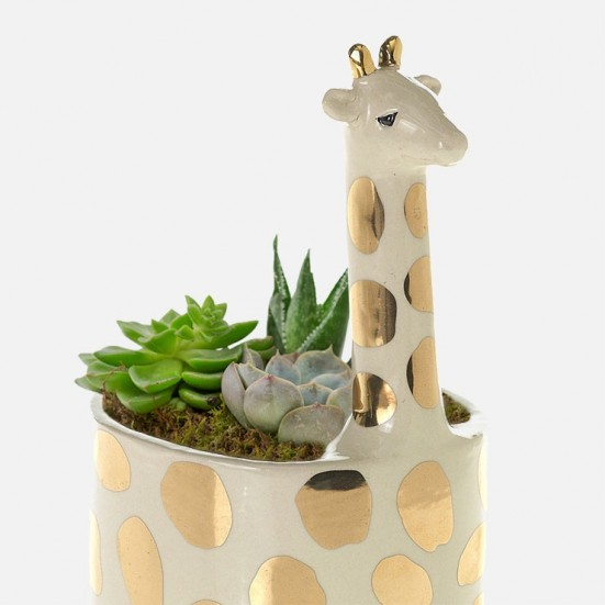 Giraffe Succulent Planter Get Well
