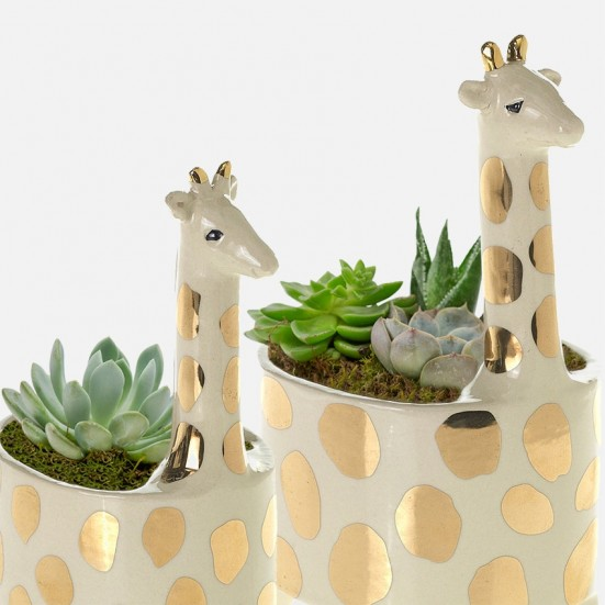 Giraffe Succulent Planter Set New Baby