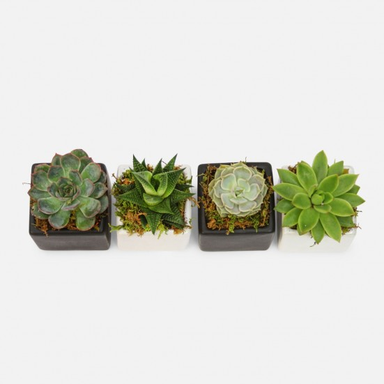 Four of a Kind Mini Succulents Get Well