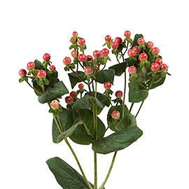 Red Hypericum | Flower Delivery NYC Florist | Plantshed.com